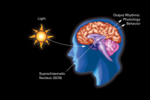 PD circadian picture