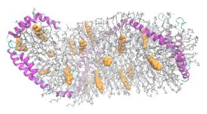 PD  ApoA1+lipids_3K2S