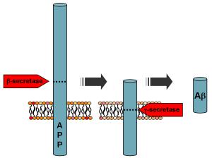 PD  APP_processing