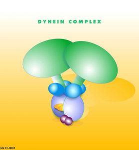 PD -Dynein_coplex