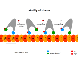 PD     Motility_of_kinesin_en
