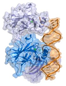 p53 molecule by Splette