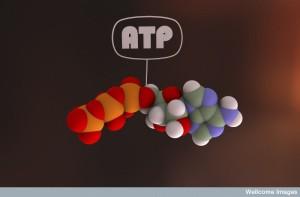 B0007640 ATP