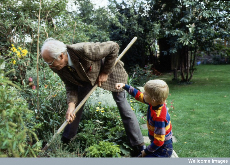Does cognitive ability improve in old age for Gardening with children