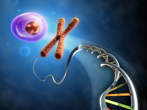Illustration showing the formation of an animal cell from dna an