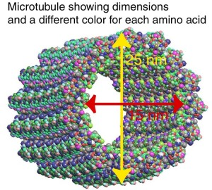 microtubule_residues2