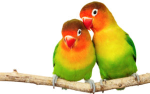 Artistic Birds