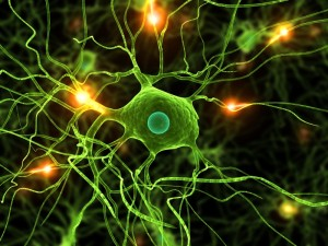 FEATURE Microglia  iStock_000006935562Small