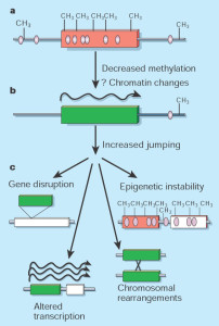 jumping and epigenetic instability
