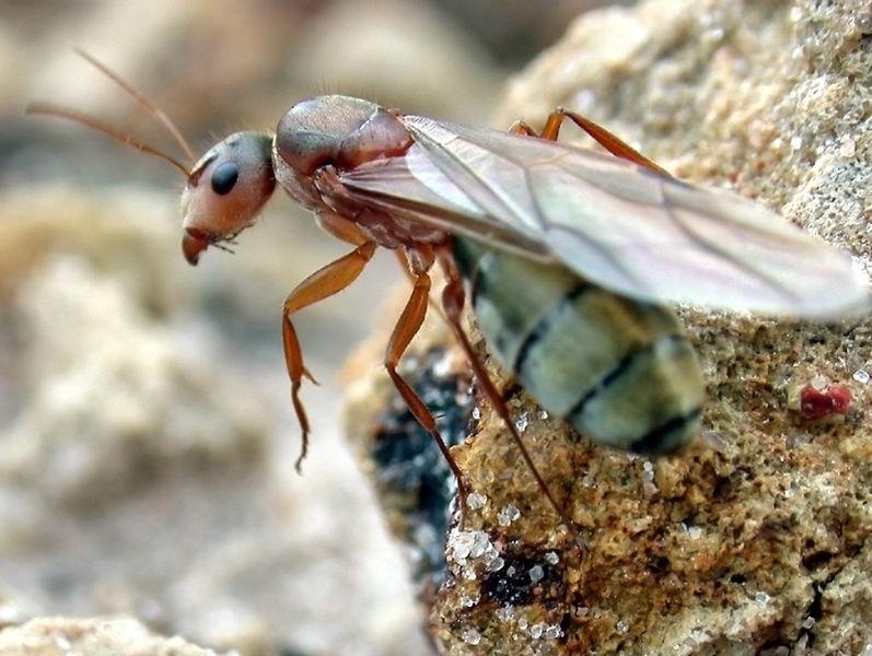 Swarm Theory - National Geographic Magazine
