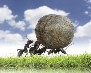 bigstock teamwork team-of ants rolls-s-44319184