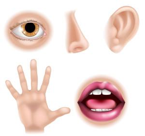 Five Senses Body Parts