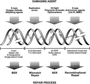 damage and types of repair