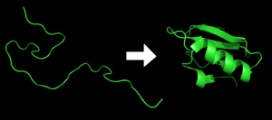 PD   Protein_folding
