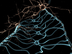 3D rendering ofNeuron Oligodendrocytes in the brain