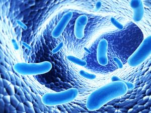 Colony of pathogen bacterias - 3d render