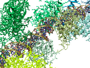 FEATURE    Protein molecule for Complex Neuron Machinery