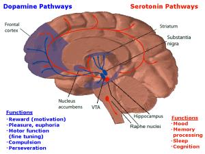 PD Dopamineseratonin