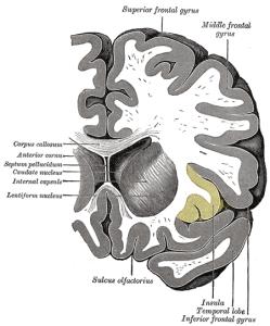 PD insular_cortex