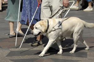 bigstock-Guide-Dog-2529007
