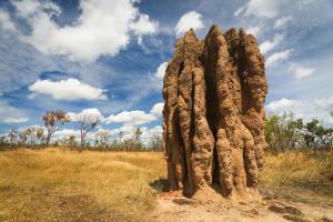 bigstock Termite Mounds nasutitermes-T-34054427