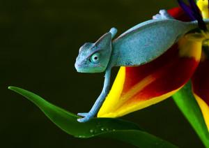 bigstock lizard Chameleons-Lizard -of-th-27673343