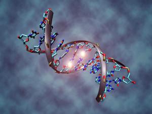 Christoph-bock DNA_methylation