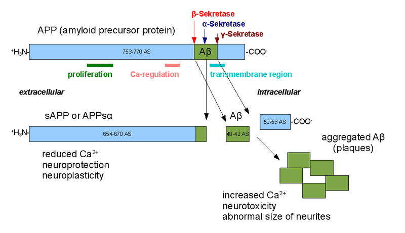 Amyloid cascade hypothesis: Pathogenesis and therapeutic