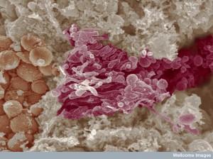 B0004340 Golgi complex and mitochondria