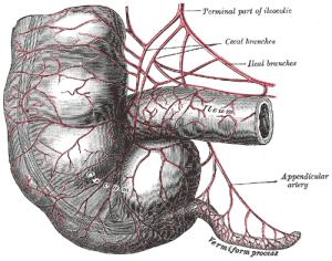 PD Appendix Gray536