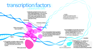 Kelvinsong wik Transcription_Factors