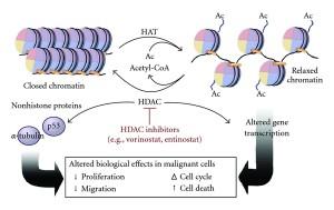 Lxu27 wik Histone_acetylation_and_deacetylation
