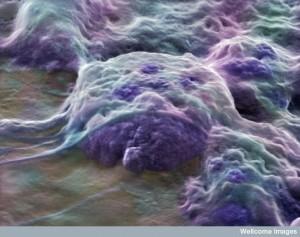 B0006251 Human embryonic stem cells
