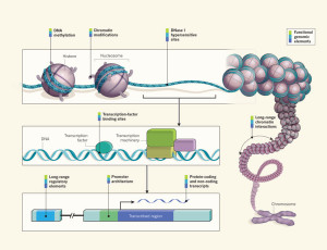Functional genomic elements