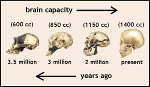 brain-evolution-3