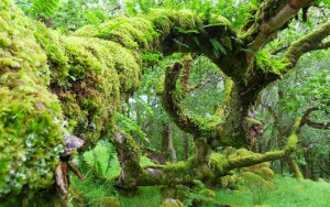 old-mossy-tree-nature-1920x1200-wallpaper359574