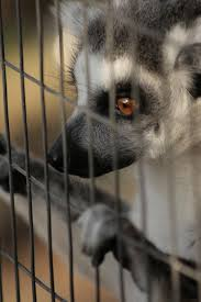 captive animal 3