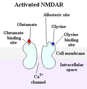Activated_NMDAR