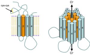 GABAA_receptor_schematic