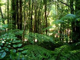 Rainforest Google