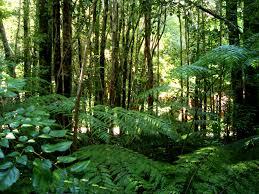 Rainforest Google