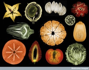 B0009442 Collage of mixed fruits and vegetables, MRI