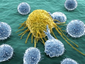 FEATURE Cancer and B Cells iStock_000019908954XSmall