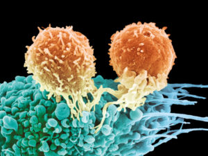 T cells attacking cancer